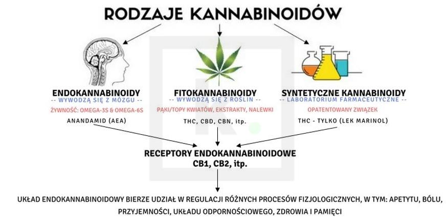 Rodzaje kannabinoidów