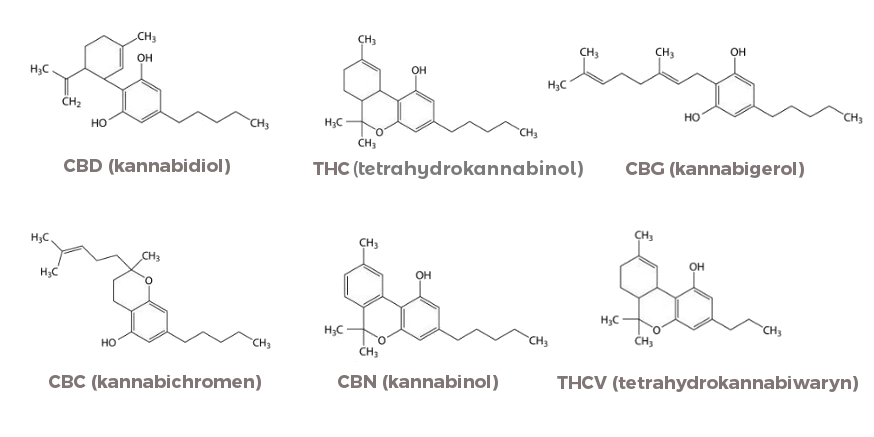 Jakie są rodzaje kannabinoidów?