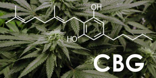 Jakie są właściwości CBG?