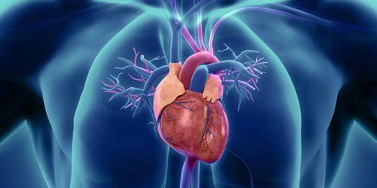 Olej konopny CBD a choroby serca