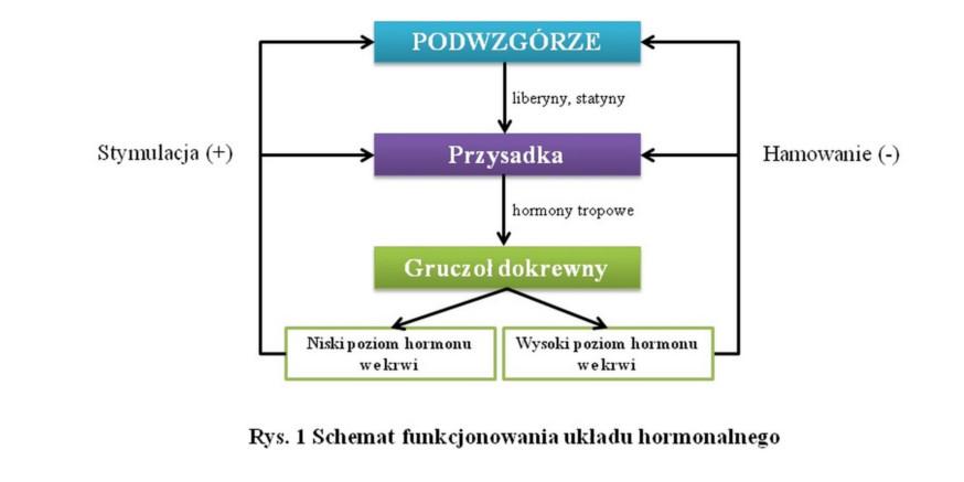 Olejek CBD a regulacja hormonalna