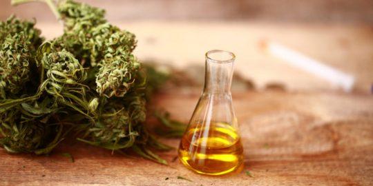 Czy olejek CBD można przedawkować?