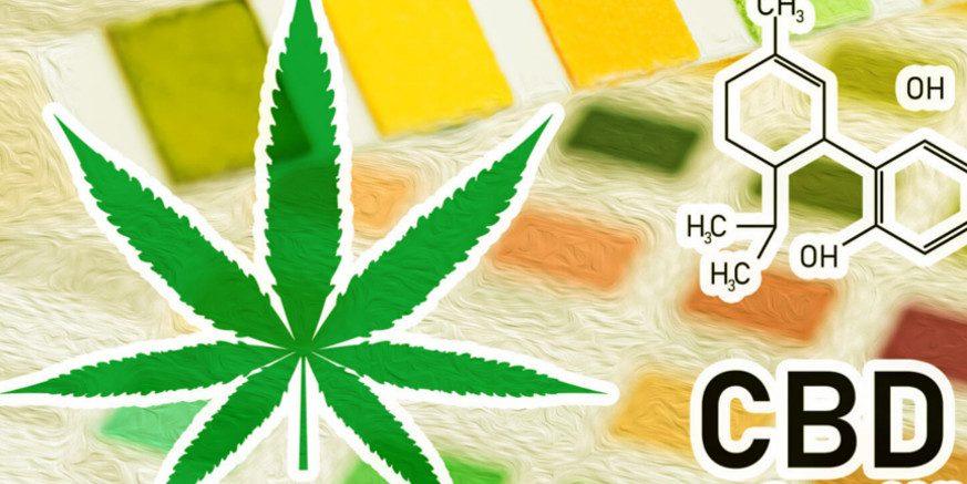 Czy po zażyciu oleju CBD przejdę test na narkotyki?